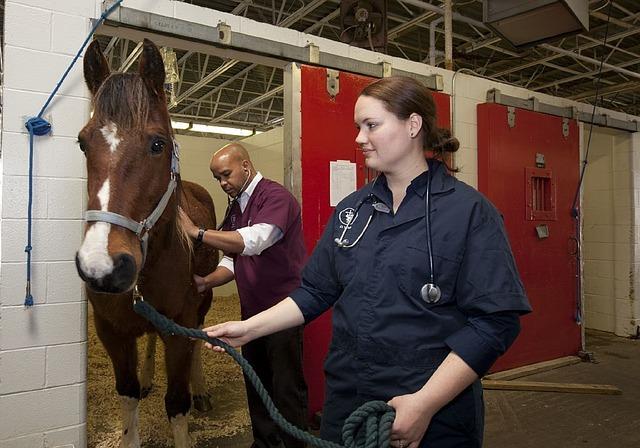 hest og dyrlæge
